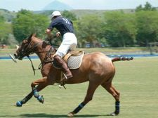 658107_polo_player%20sxchu.jpg